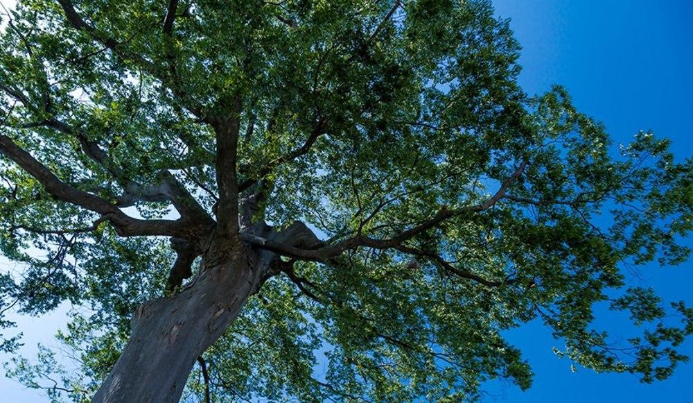 木イメージ